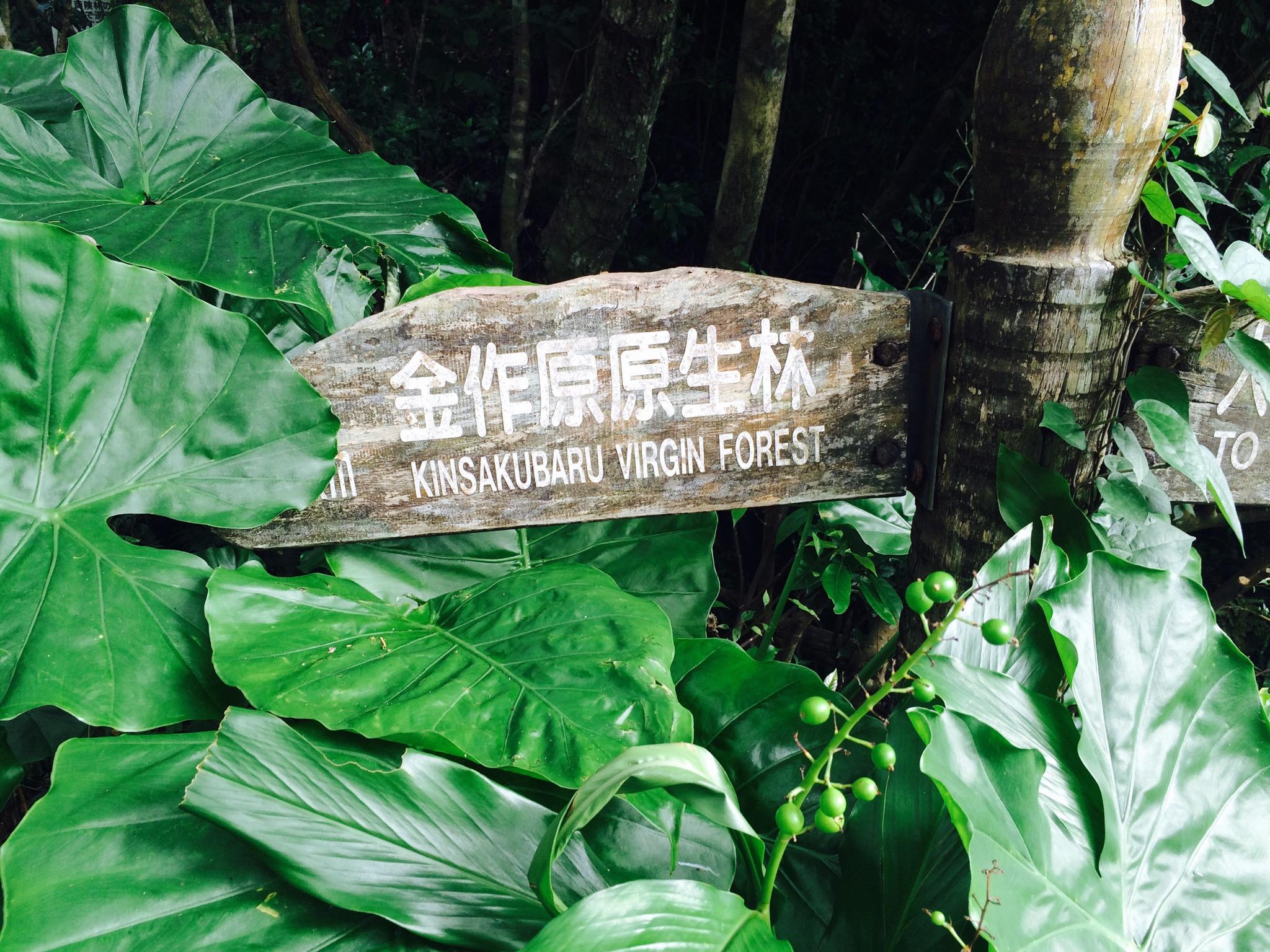 奄美大島の金作原原生林に到着