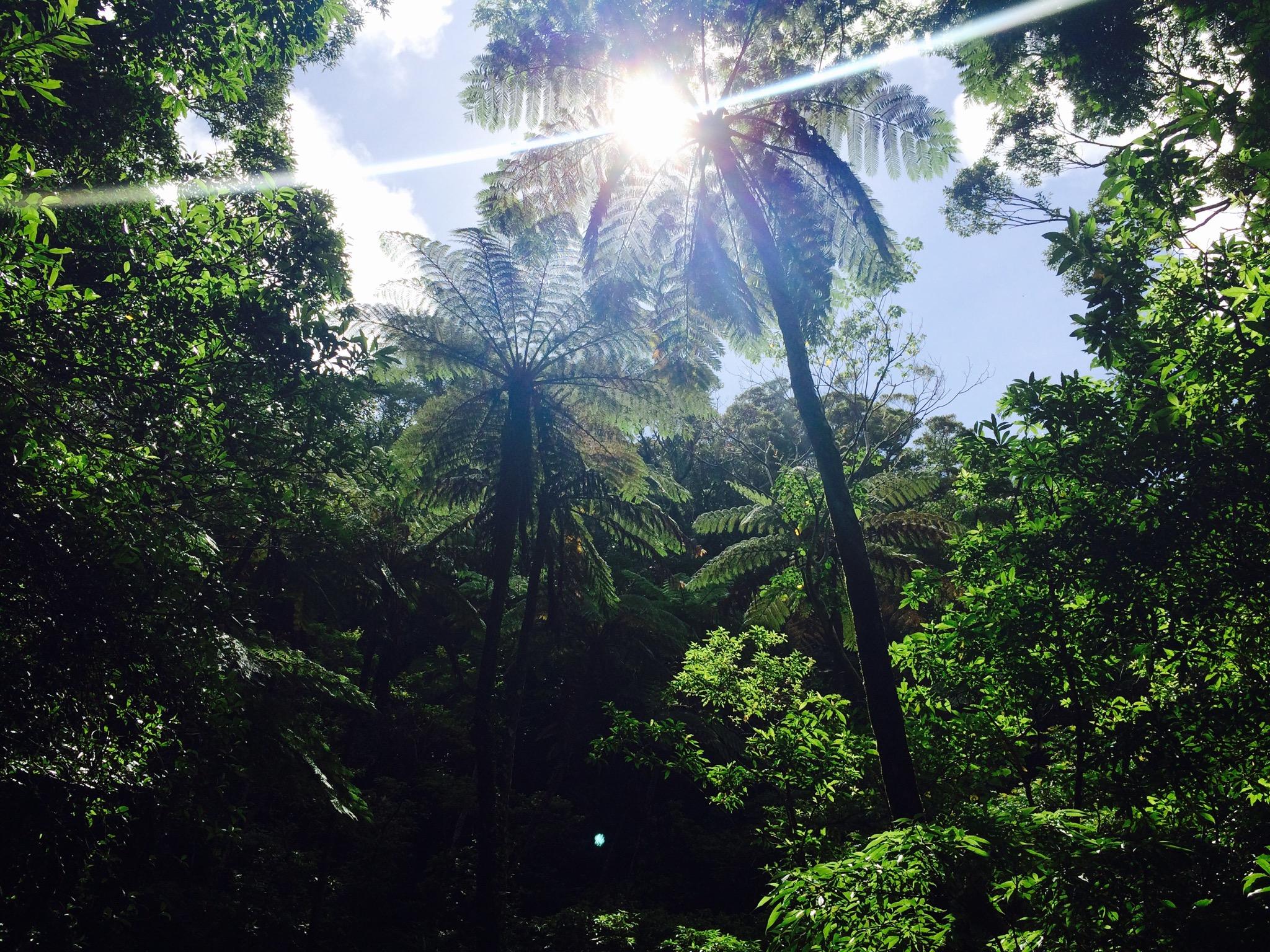 奄美のガイドブックにもよく登場する金作原原生林の撮影スポット